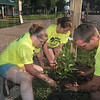 Green thumbs in action: Duke Energy Wabash River Empowering summer interns Kylie Walter, Angie Jenkins and Sean Weir work together to beautify the new learning trail at Fairbanks Park Friday as part of the United Way's Day of Action.