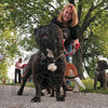 "No more monkeying around, let's walk: Erika Cantin's french bulldog, Sarubobo, Japanese for ""monkey baby,"" surveys the other canines as they arrive at Memorial Stadium for 1-K-9 Saturday."