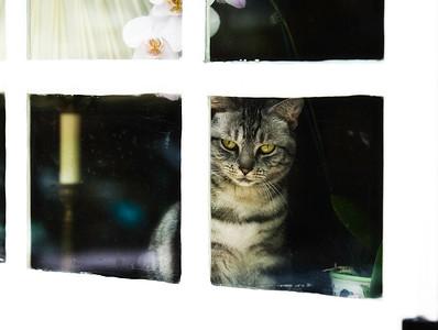 Charleston Cat