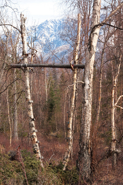 A local hunter's tree stand blends into the surroundings fairly well.