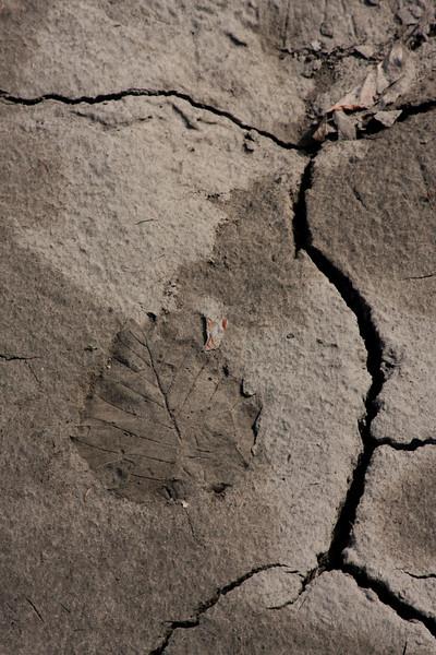 A leaf print without a leaf.
