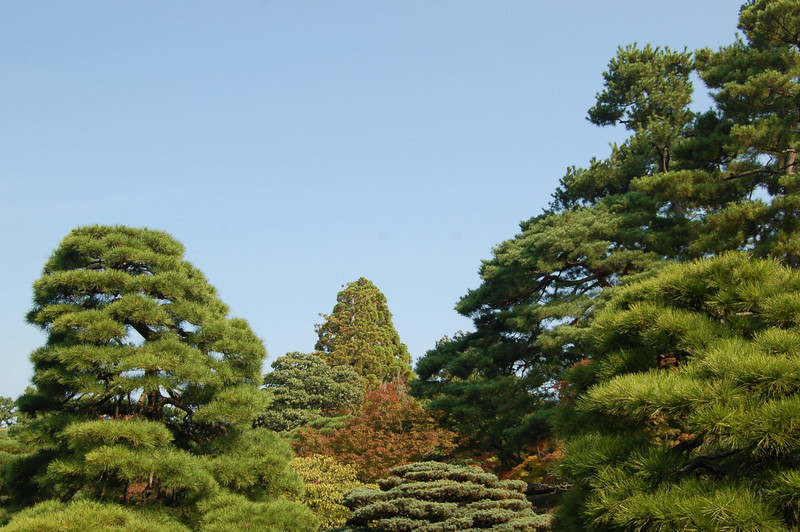 trees at imperial palace