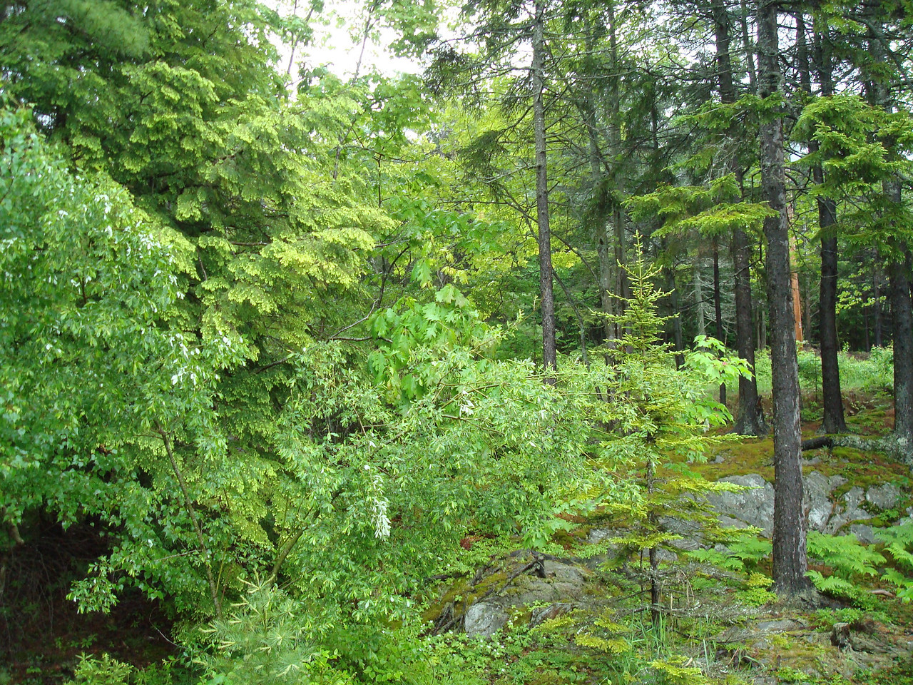 The forest that surrounds Roxi's house