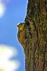 Chipmunk at Great Bay National Wildlife Refuge