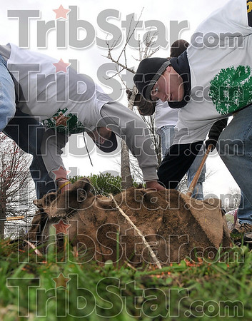 Tribune-Star/Joseph C. Garza<br /> Planting (for) Trees, (Inc.): Rose-Hulman students Kurtis Muehlenkamp of Cincinnati and Andrew Siekmann of Shelby Township, Mich., place a tree in a freshly dug hole near Collett Park Saturday.