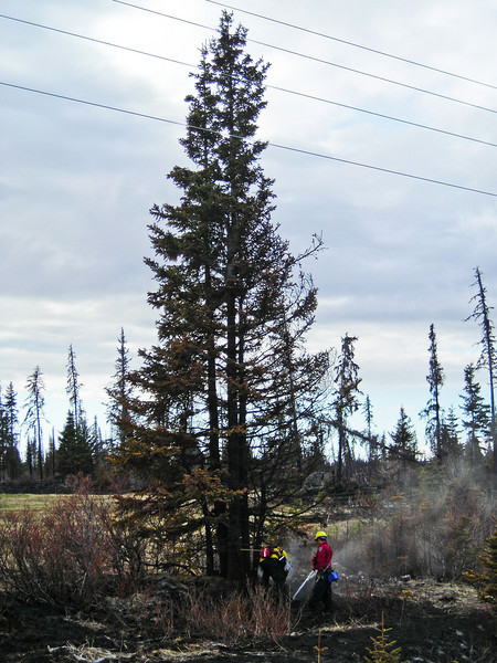 Bowzr Diaz and Greg Adamietz finish off some heat at the base of a burnt spruce tree.