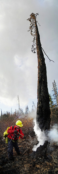 "Greg Adamietz waters down a hotspot in a dangerously burned ""snag"" with a fedco, a firefighting tool with five gallons of water and a nozzle. These oversized squirtguns are notoriously unreliable as far as keeping the water inside them goes, so firefighters know that any time these come off the truck, we're getting wet.  This is a stitch of five or six photos."