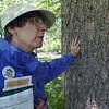 Still growing: Mary Beth Eberwein of TREES Inc. talks about the Ohio Buckeye tree she leans against. The Ohio buckeyebears a fuzzy or spiny husked nut.