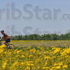"Tribune-Star/Joseph C. Garza<br /> Golden cycling opportunity: A participant in the sixth annual Habitat for Humanity ""Cover Indiana"" bicycle tour rides between fields containing golden rod Tuesday on his way to the Centenary United Methodist Church in Terre Haute."