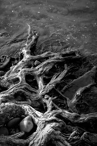 Roots in the Water