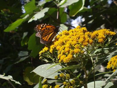 Monarch - Imani Joseph