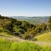 Oak trees and green hills