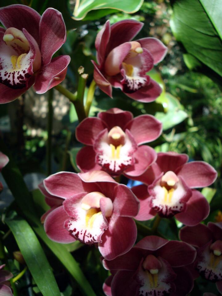 U.S. Botanic Garden
