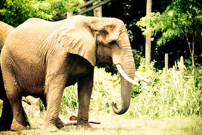 We love the elephants