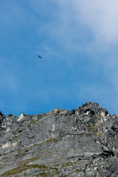 On the hike in to Reed Valley we spotted an eagle circling high overhead.