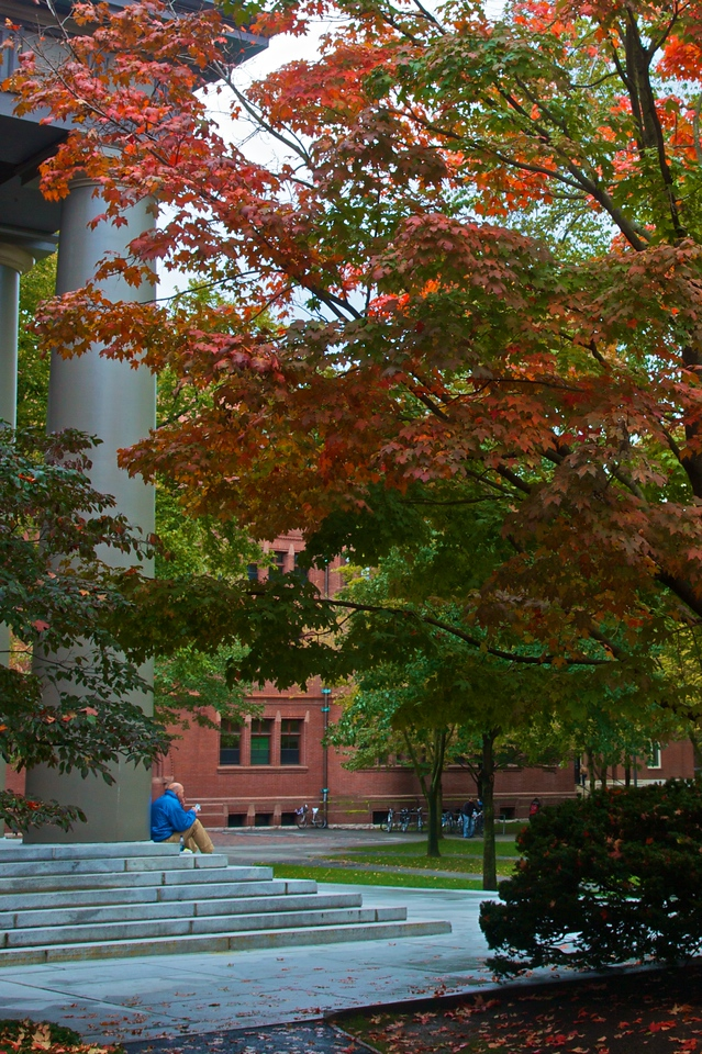 A man reading under the trees at Harvard.