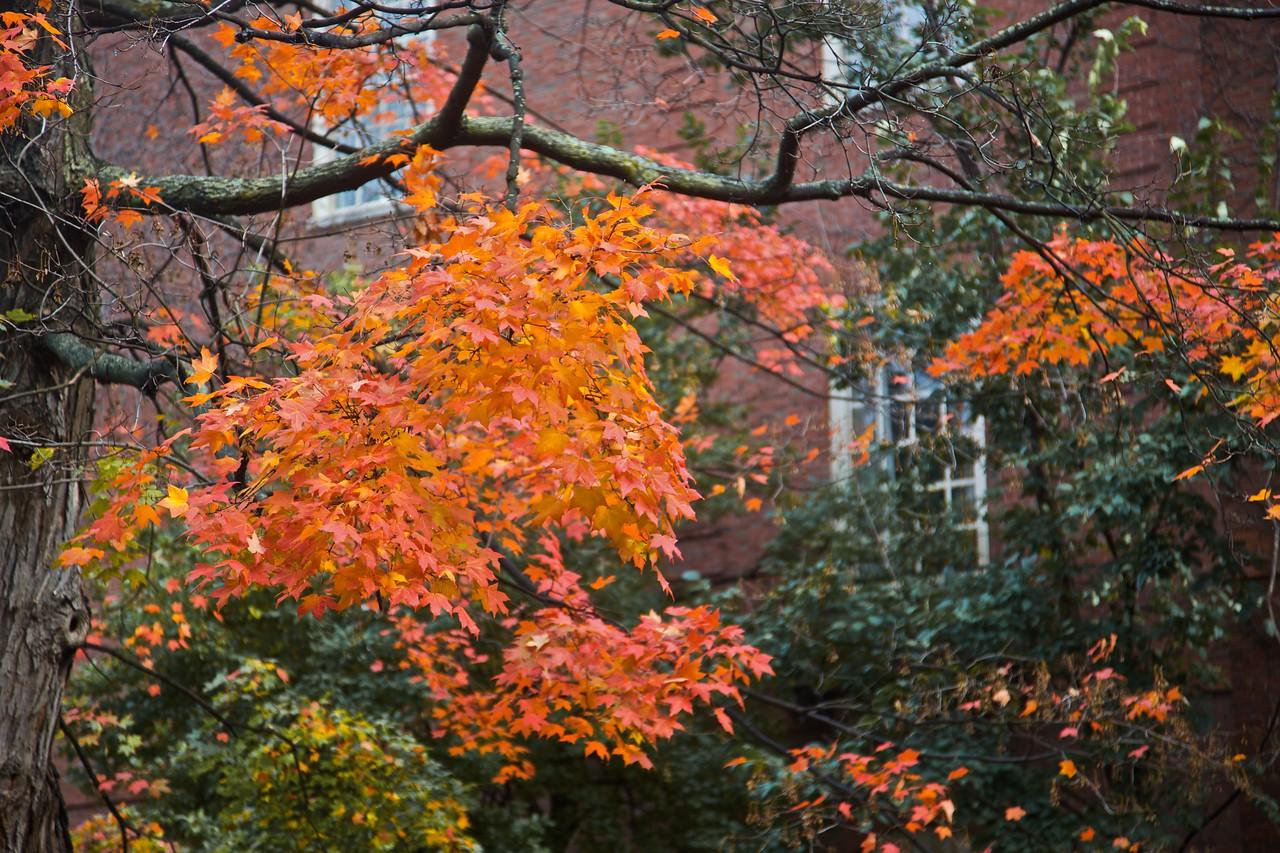 Autumn leaves in Cambridge.