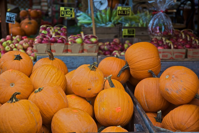 Pumpkins for sale at an open-air market in Mont-Royal, the original settlement of Montreal.