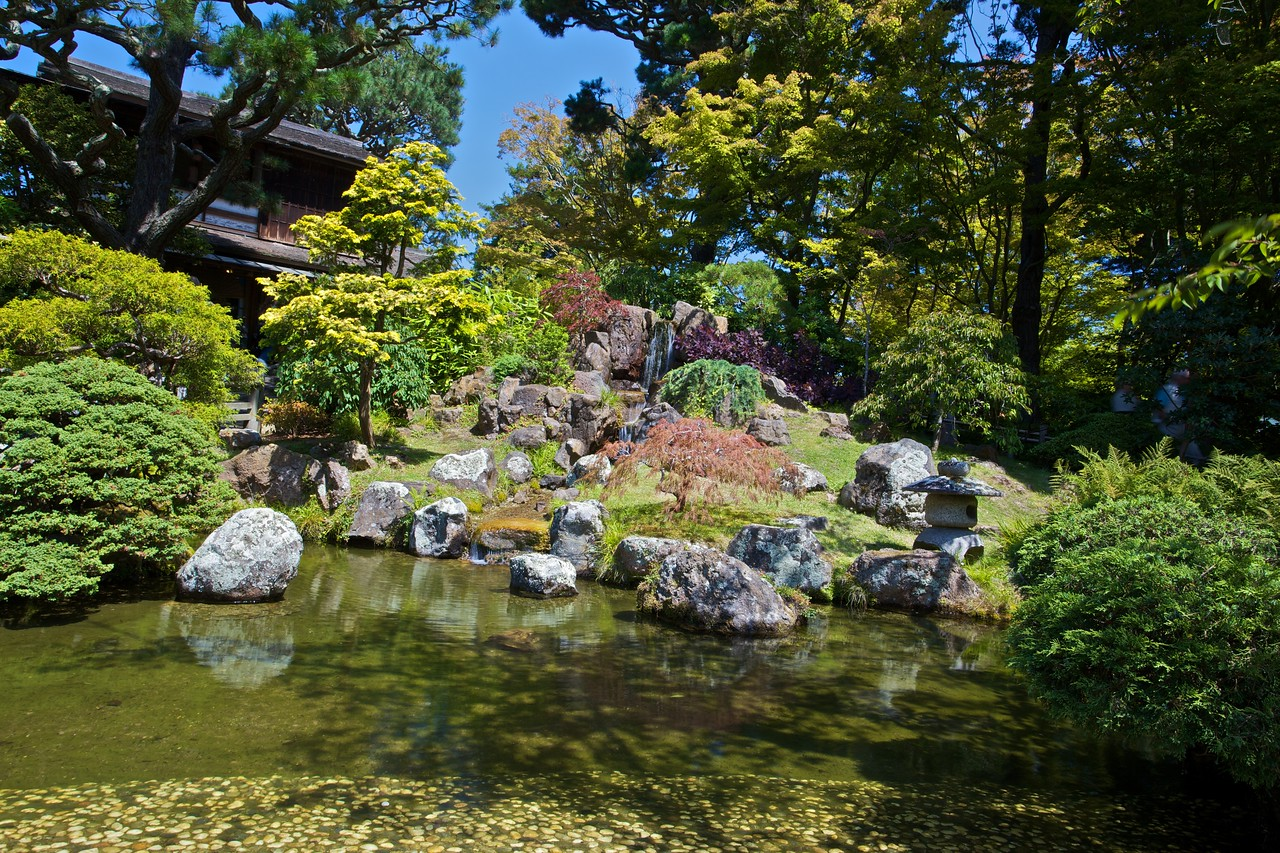 A pond in the Japanese Tea Garden in San Francisco.