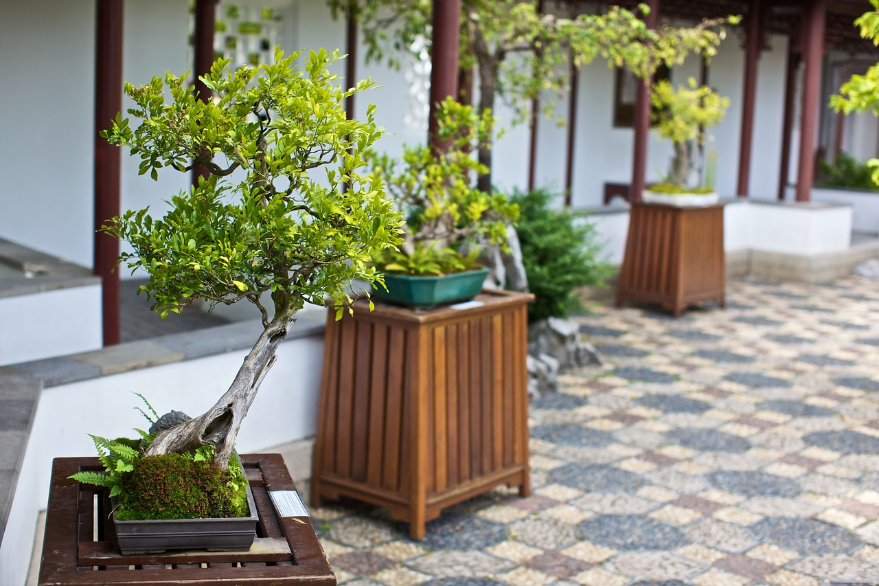 Trees in the courtyard within the Dr Sun Yat-Sen Classical Chinese Garden in Vancouver.