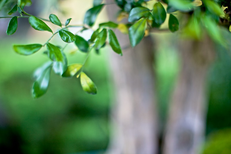 Close-up of leaves in the Dr Sun Yat-Sen Classical Chinese Garden in Vancouver.
