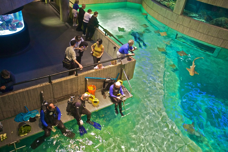 Staff get ready for feeding time at the National Aquarium in Baltimore.