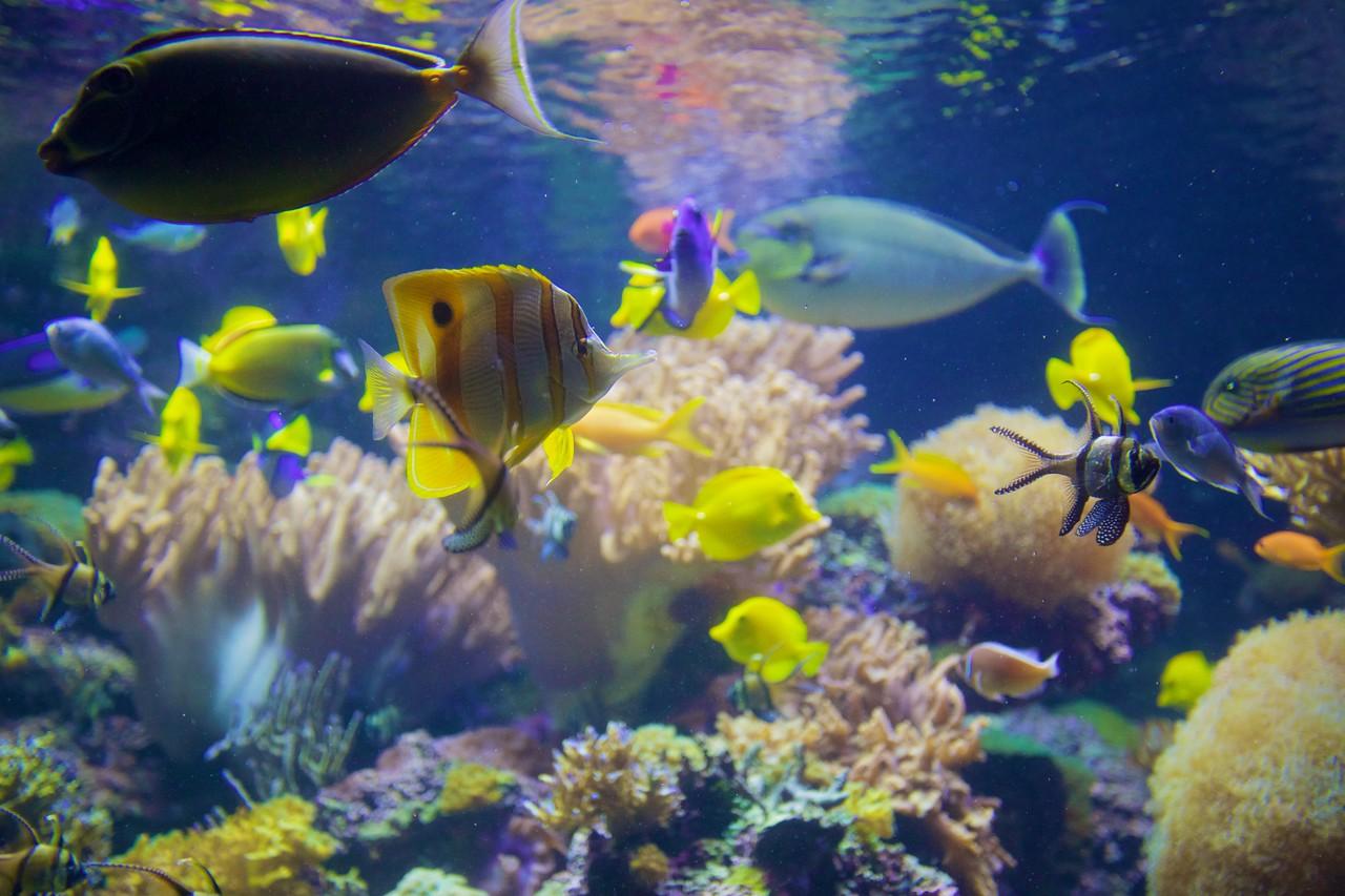 Fish in the National Aquarium in Baltimore.