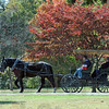 Old fashioned ride: A horse-drawn carriage laps Collett Park durng Sunday's Old Fashioned Days event.