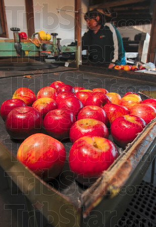 Tribune-Star/Joseph C. Garza<br /> Grader: Sandy Ditzler operates the grading table Monday that separates the apples into three sizes: medium, large and select.