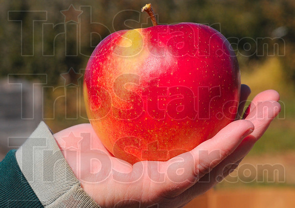 Tribune-Star/Joseph C. Garza<br /> A select example: Sandy Ditzler displays one of her familyÕs select apples which happen to be the largest they produce.