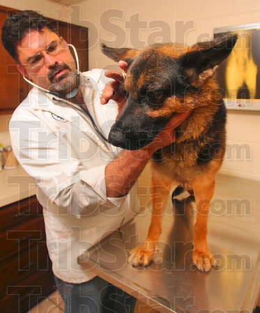 Tribune-Star/Joseph C. Garza<br /> After the first flight: Honey Creek Animal Hospital veterinarian Michael E. Staub, DVM, looks over German Shepherd, Heidi, Monday at the clinic. Heidi was flown to the hospital through the Pilot N Paws program where Staub will perform the needed surgery.