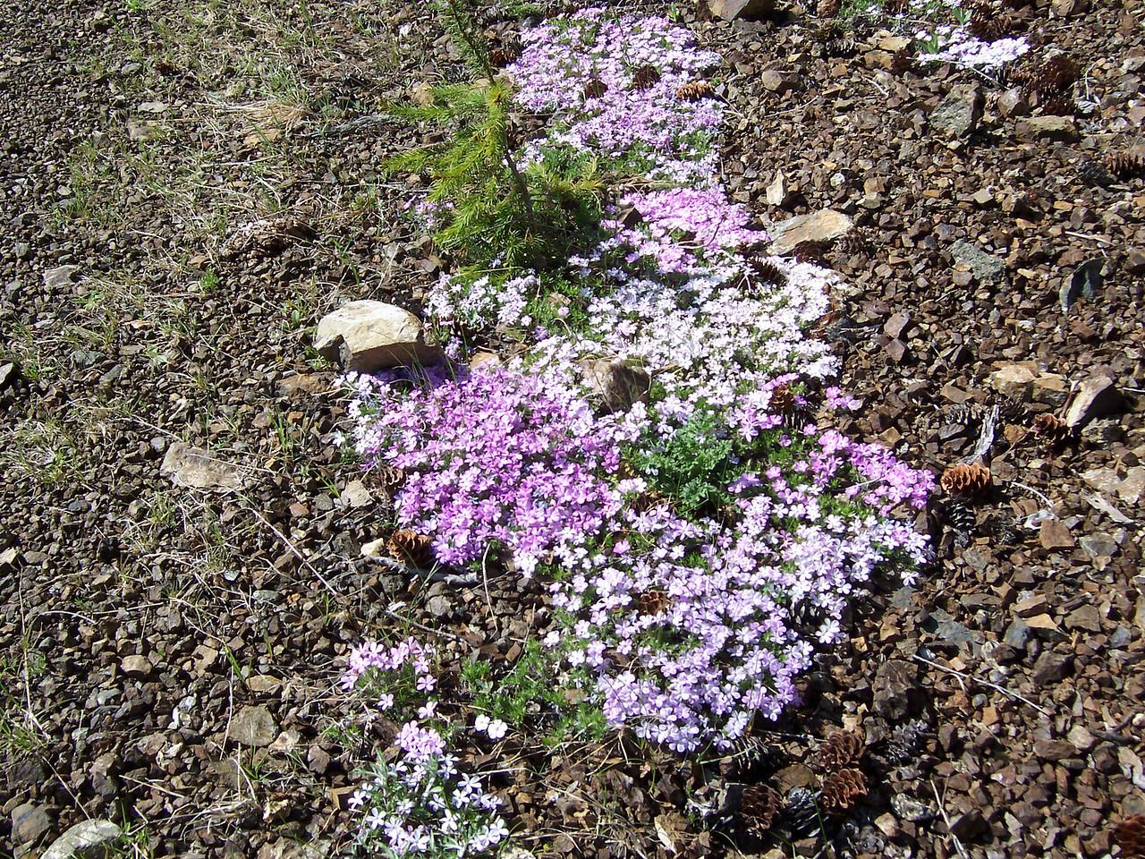 Wild flowers on 2365 rd.
