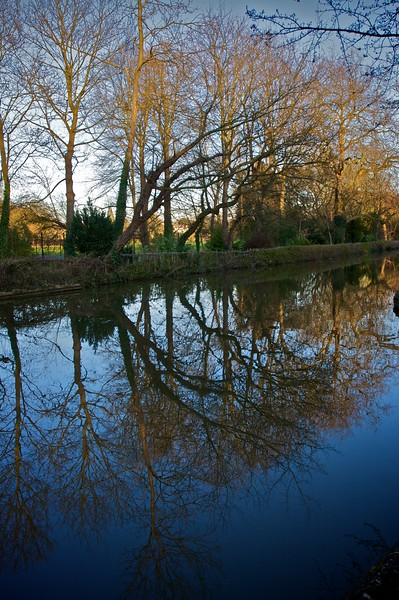Trees along Oxford Canal in the late-winter early-evening sunlight.