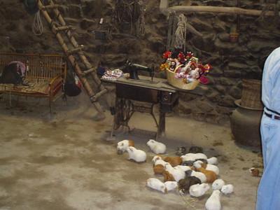 Guinea Pigs- Imani Joseph