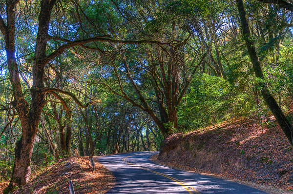 I had never been up Page Mill Road, into the Santa Cruz Mountains, and over to the coast so my girlfriend thought it would be a great excuse to play with my new camera (Nikon D300s). Along the way we came to this really pretty bend in the road. I made her pull over so I could take some photos. It was noon and the lighting was pretty poor, so I took 5 photos and combined them into this HDR.