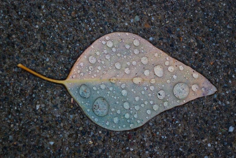 Rainy May Day (2009-05-01)
