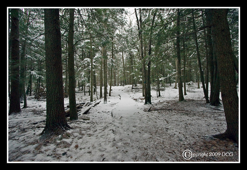 Gonic Trails at Mount Isinglass Recreational Area