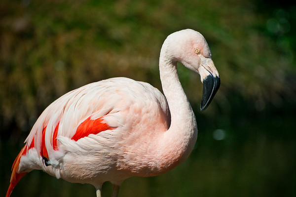 Flamingo being all pink and pretty