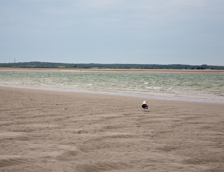 Gull on the sand bar