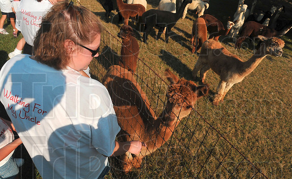 Tribune-Star/Joseph C. Garza<br /> Alpaca petting pit stop: MS Walk participant and Georgie's Team member, Jennifer Johnson, stops to pet alpacas along one of the MS Walk routes Saturday at St. Mary-of-the-Woods.