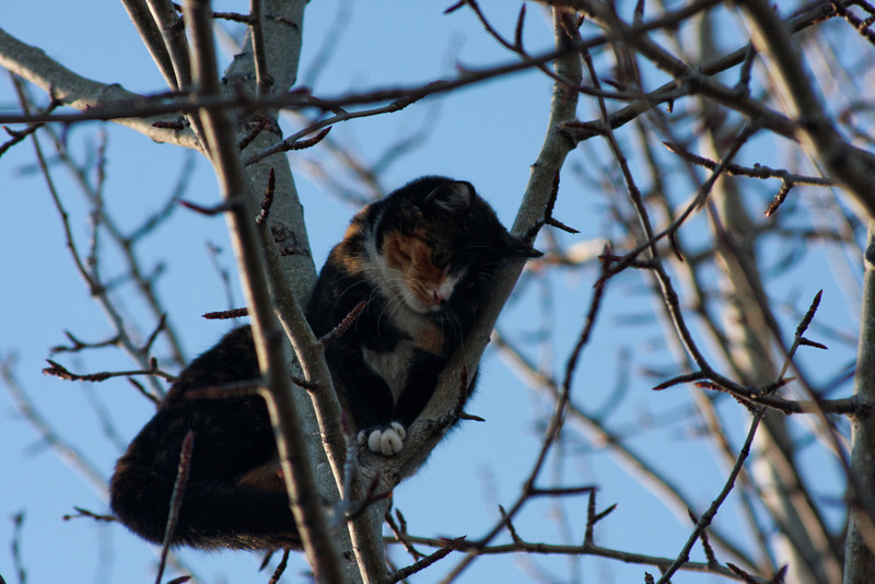 Five looks down from her perch high in a tree.