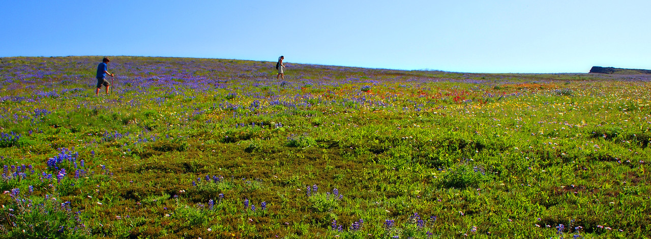 Emily and Matt hiking in the lupin.