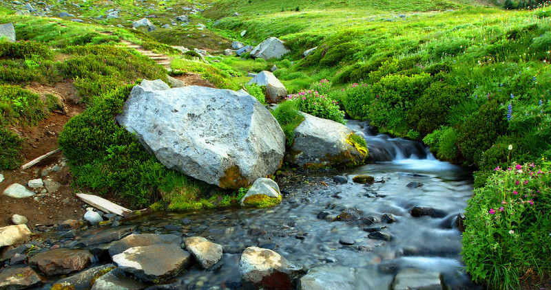 Summerland meadow stream, evening light.