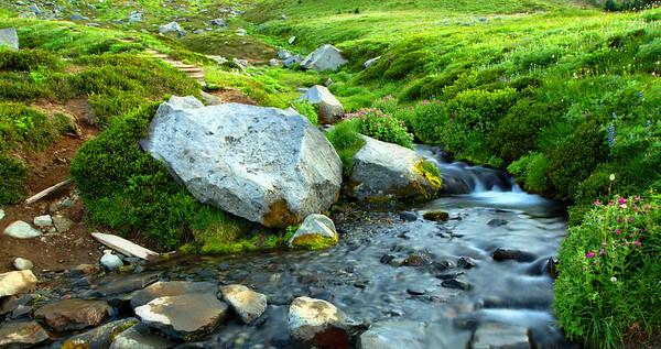 Summerland meadow stream, evening light.