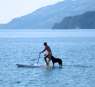 Next, it was off to Interlaken in the middle of the country, where we stayed on the shore of a lake (unfortunately, not here). Whilst swimming in the warmer top layers of this alpine lake (Thunersee) on a very hot day, this canine water taxi cruised by.