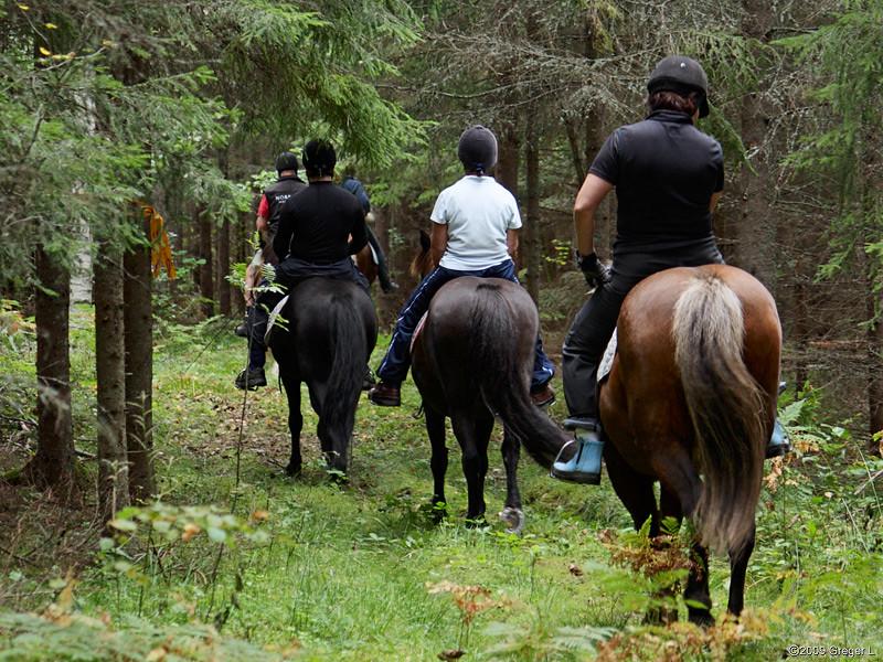 I terrängen kommer hästen till sin rätt