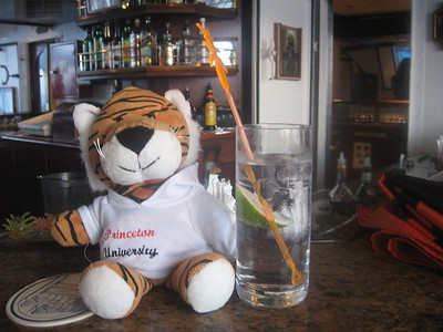 tiger hits the g+t - Andrew Gossen