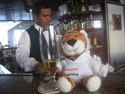 tiger enjoys the hinano - Andrew Gossen