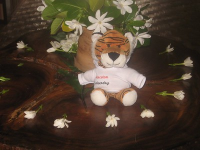 tiger with blossoms - Andrew Gossen
