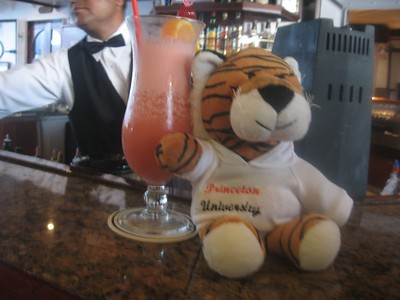 tiger and a tropical beverage - Andrew Gossen